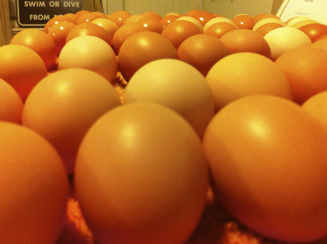 Egg production is just about 3 Dozen a Day! Thanks Girls!