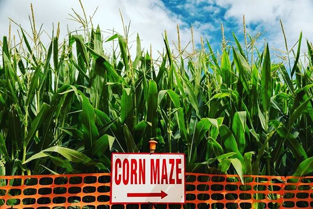 Unfortunately, due to the weather, the Corn Maze is being postponed till next Friday. Meet us at Soul Sanctuary tomorrow night at 7:11 for the best night of your week!  See you there!
