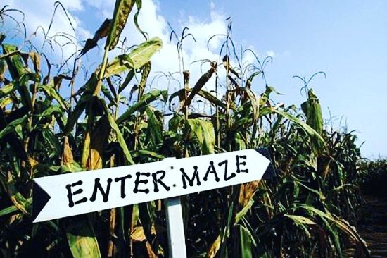 Reminder: corn maze today. SEE YOU TONIGHT! Bring your friends and see you at 6:45 at Soul Sanctuary for the best night of your week! 🎉🌽