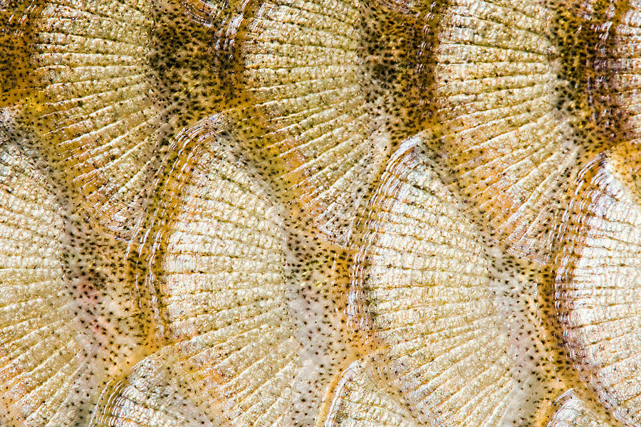 2-fish-scales-background-odon-czintos.jpg