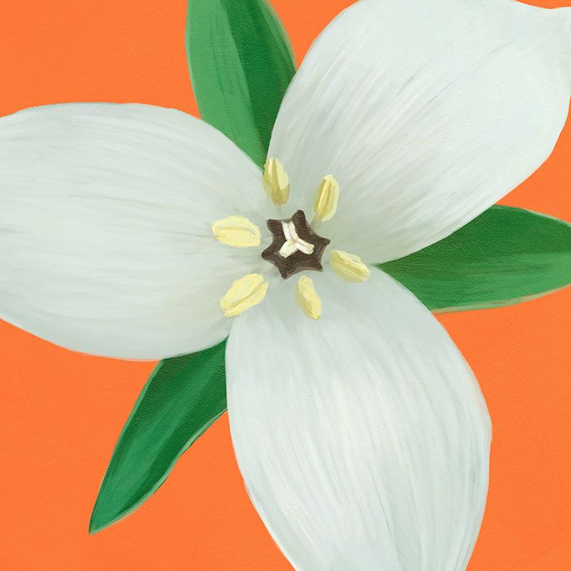 CSteffen-Flower-Art-07.jpg