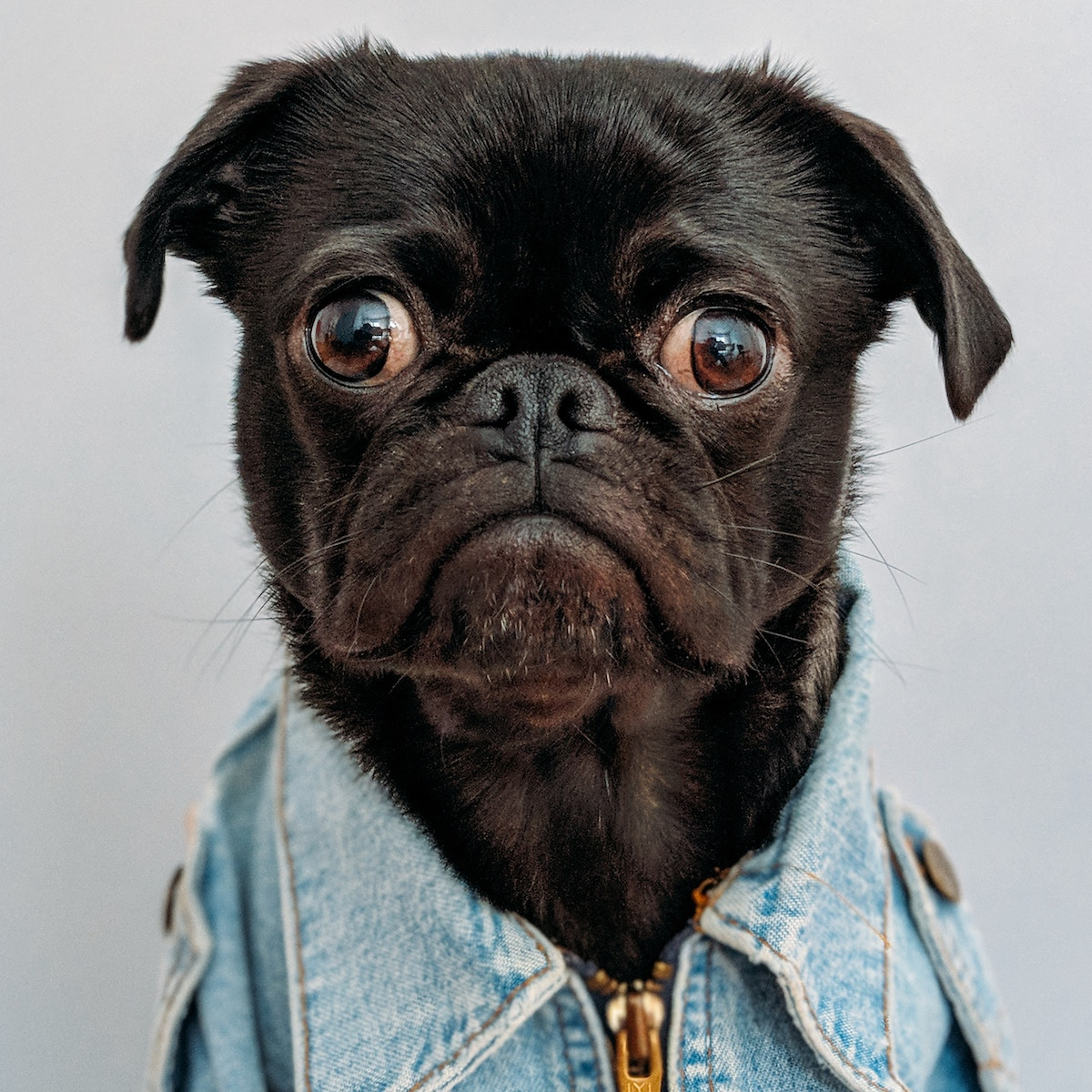 This dog is sad because coaching is closed and he hates denim