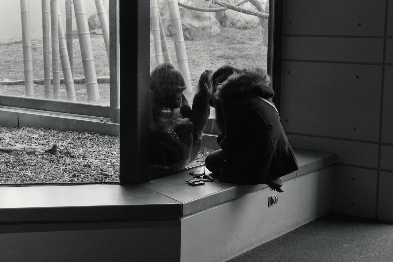 A Revolutionary Relationship: Gorilla & Girl - Chicago, IL