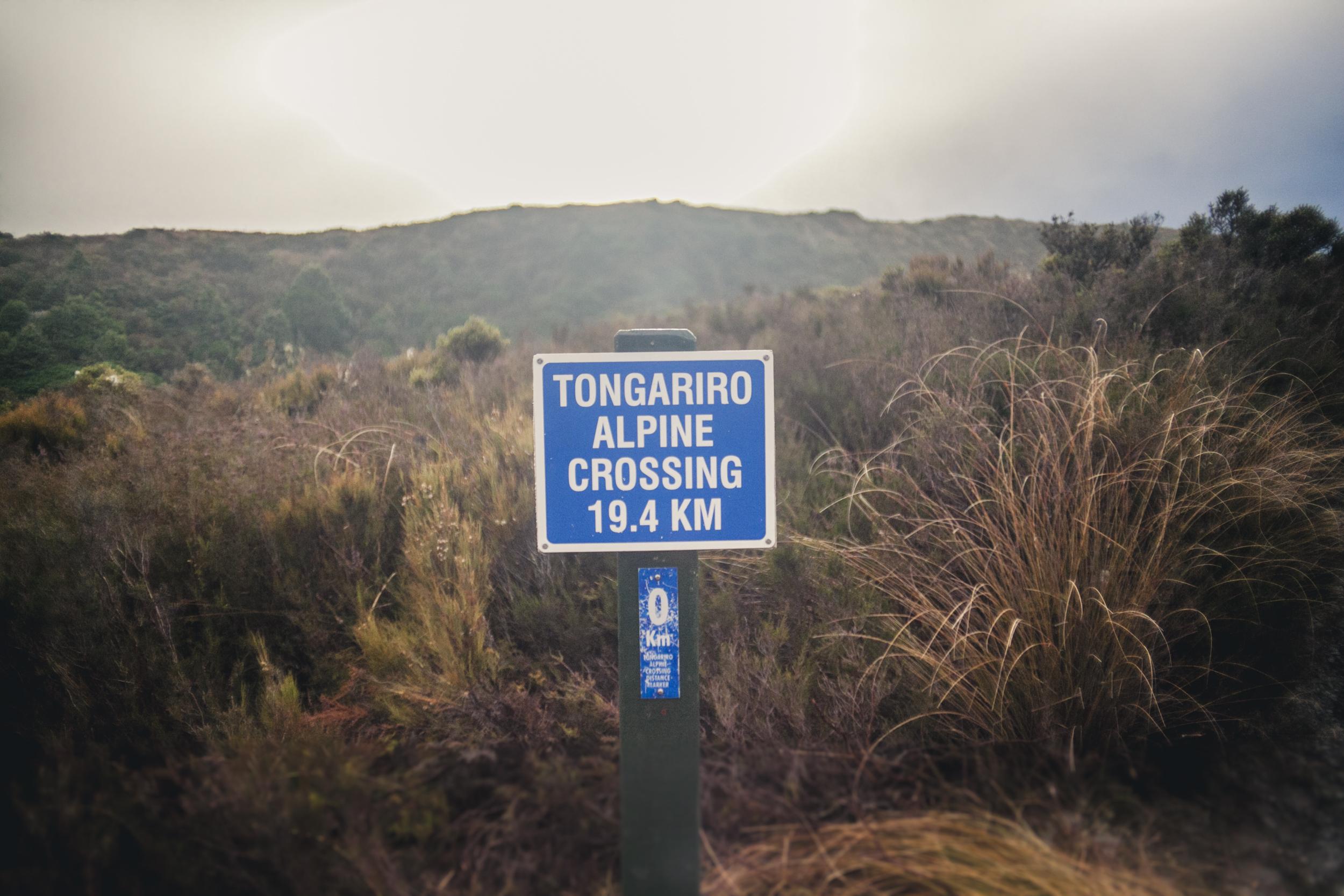 NZ15-11.jpg