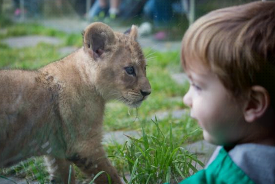 There's lot's of good reasons to support The Oregon Zoo Foundation!
