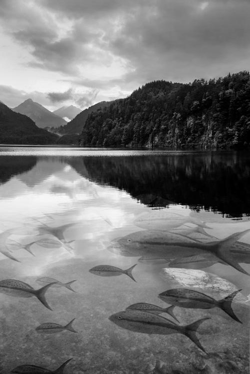 Mirror Lake Dream