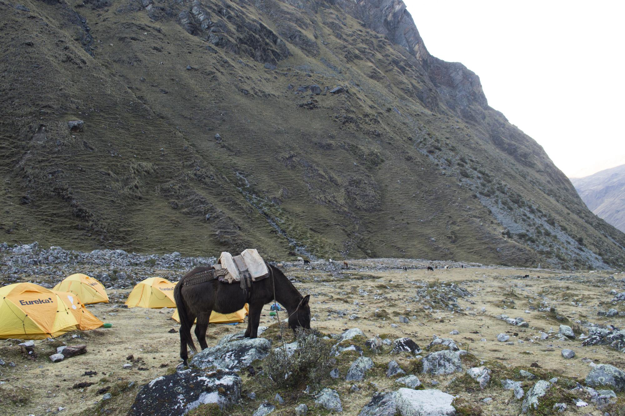 Inca 1 horse camp.jpg