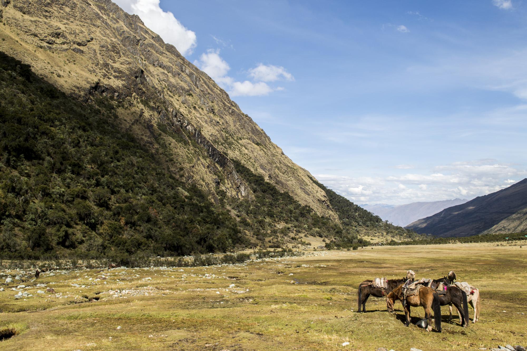 Inca 1 horses.jpg