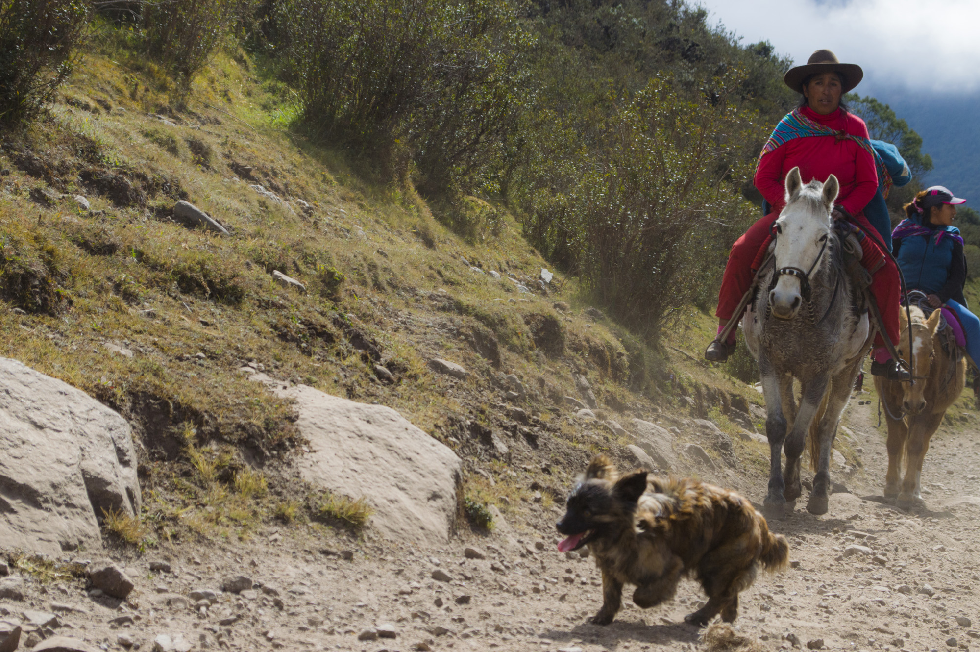 Inca 2 dog and horse.jpg