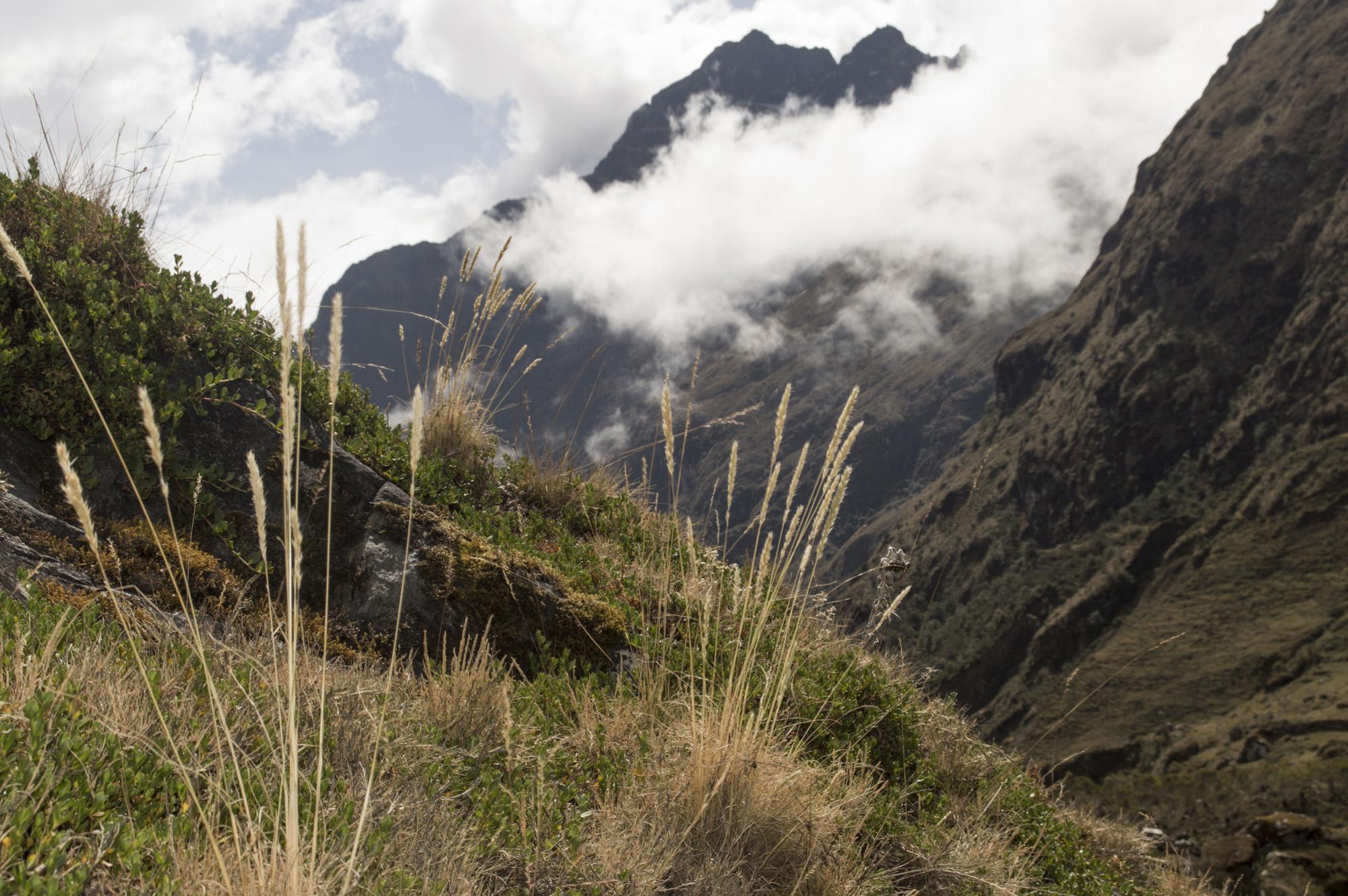 Inca 2 grass and landscape.jpg