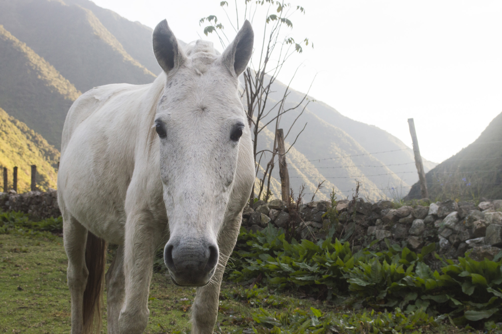 Inca 2 horse.jpg