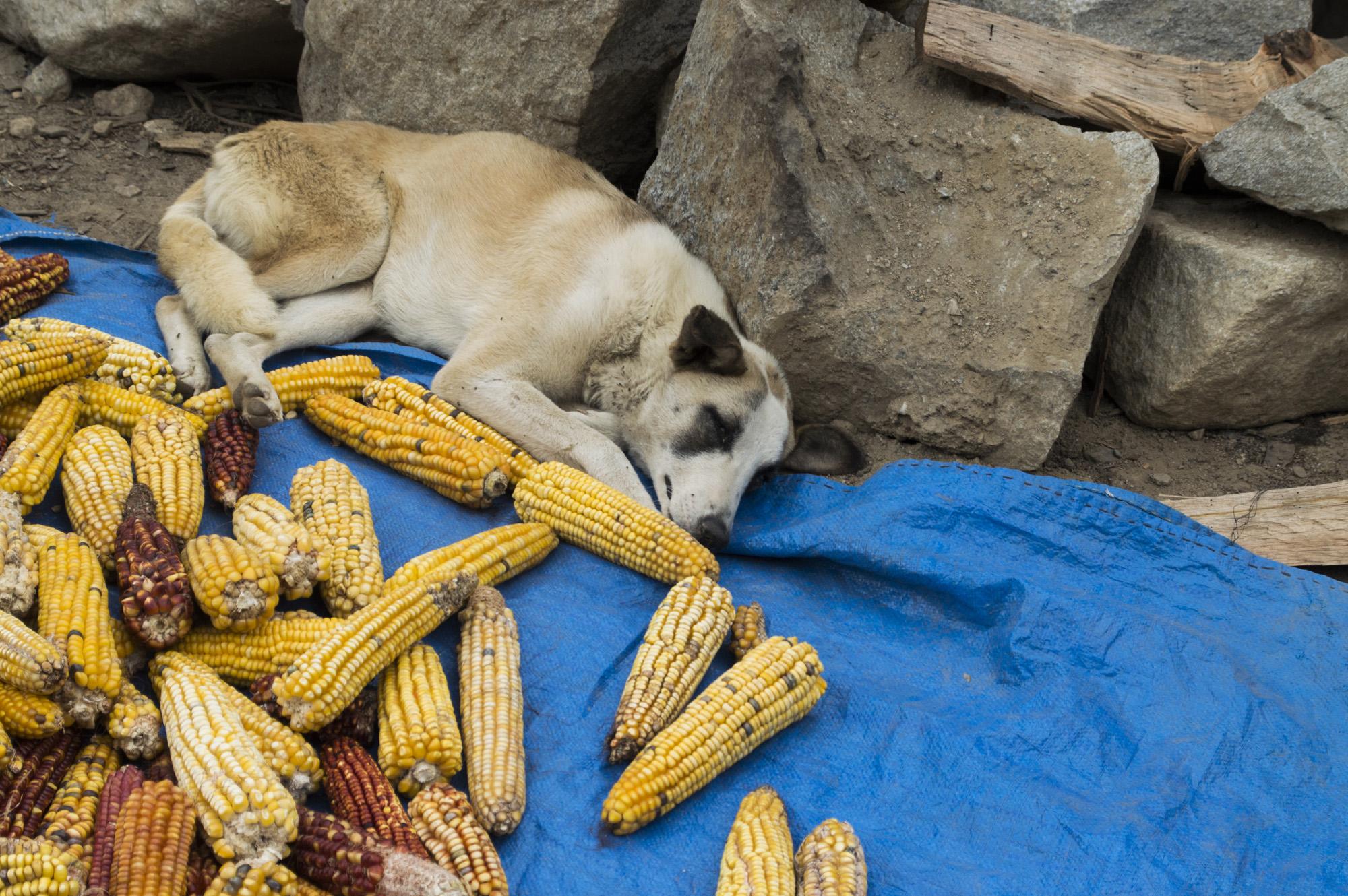 Inca 3 corn dog.jpg