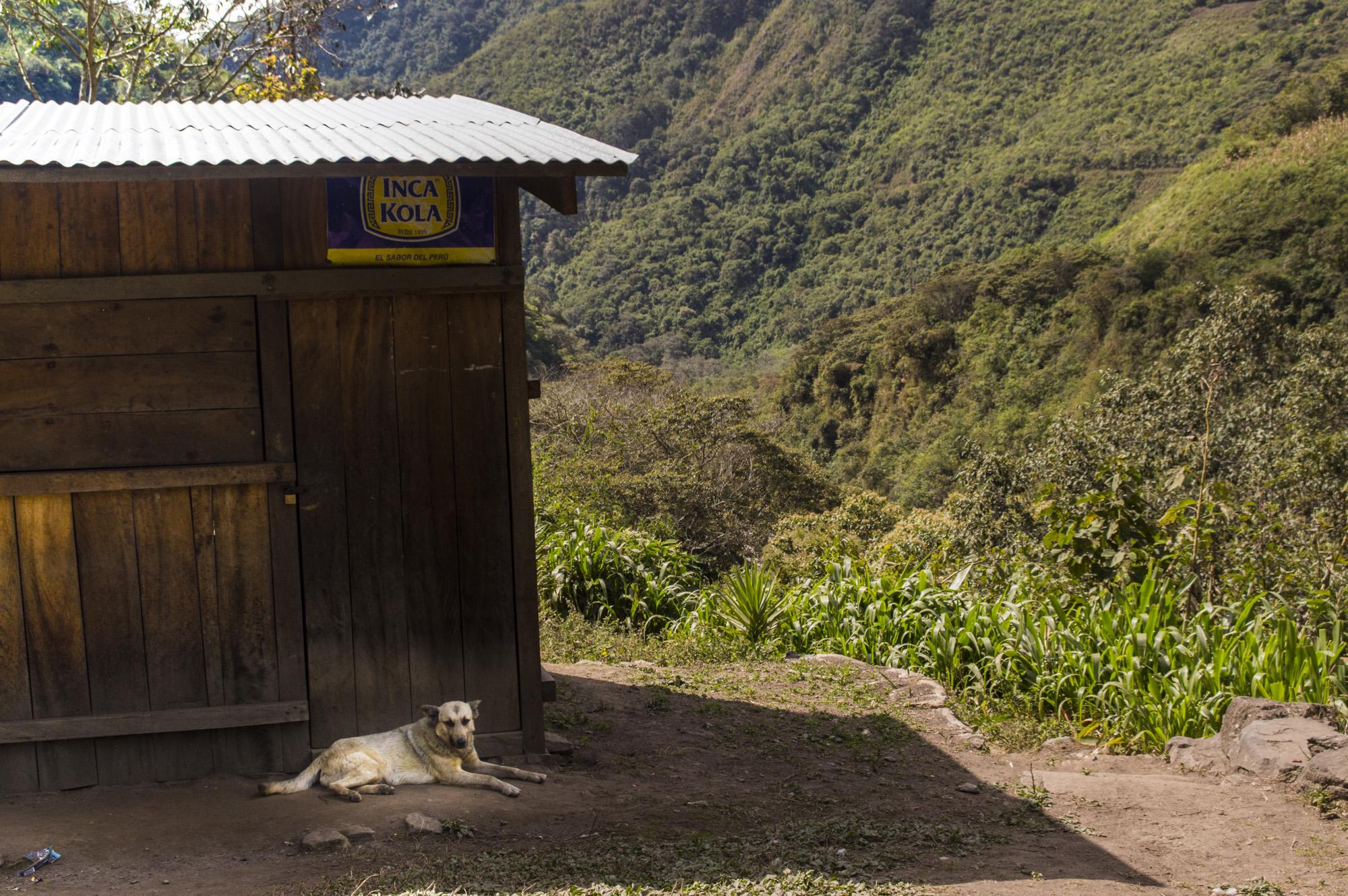 Inca 3 dog 2.jpg