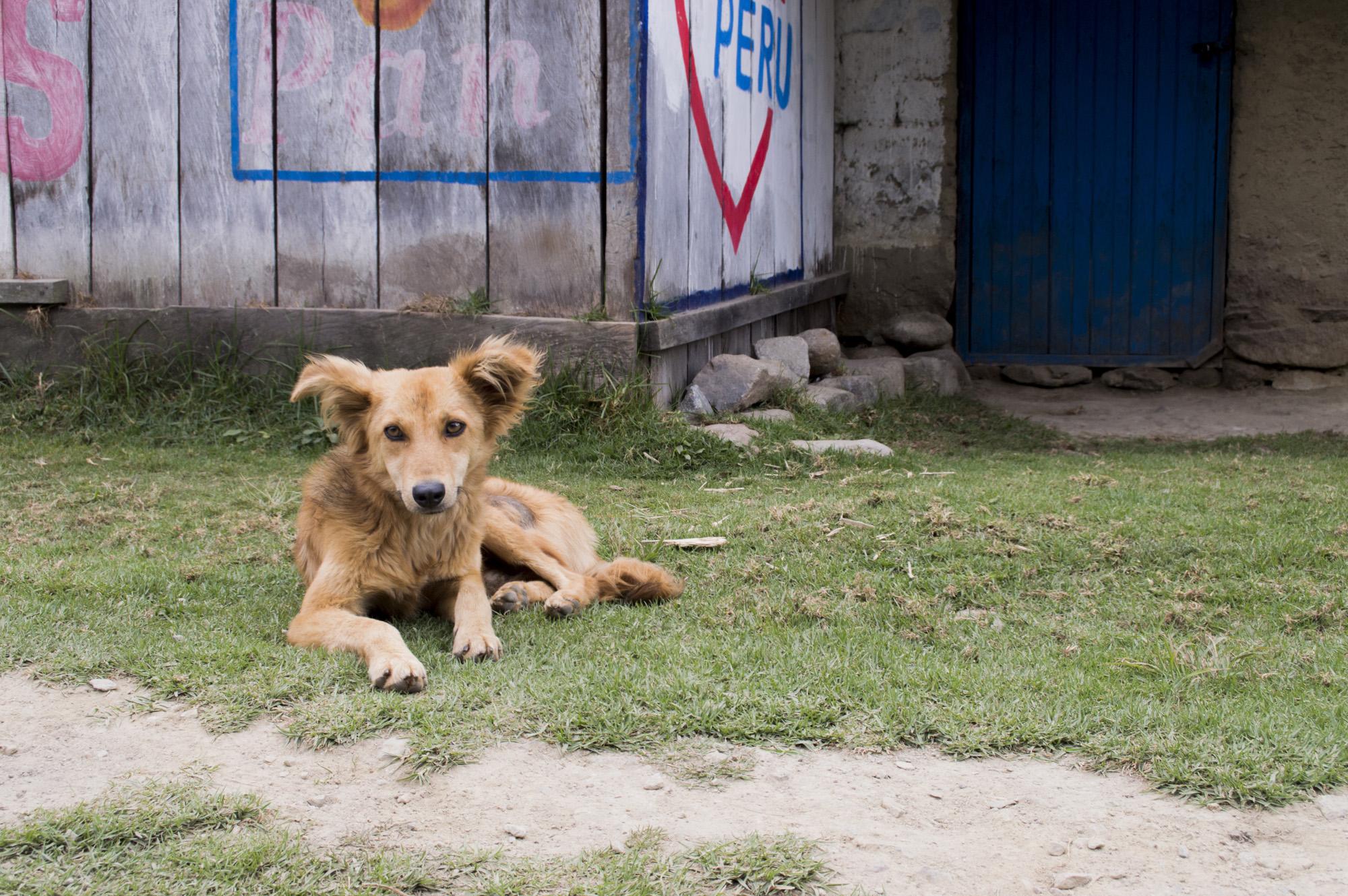 Inca 3 dog ears.jpg