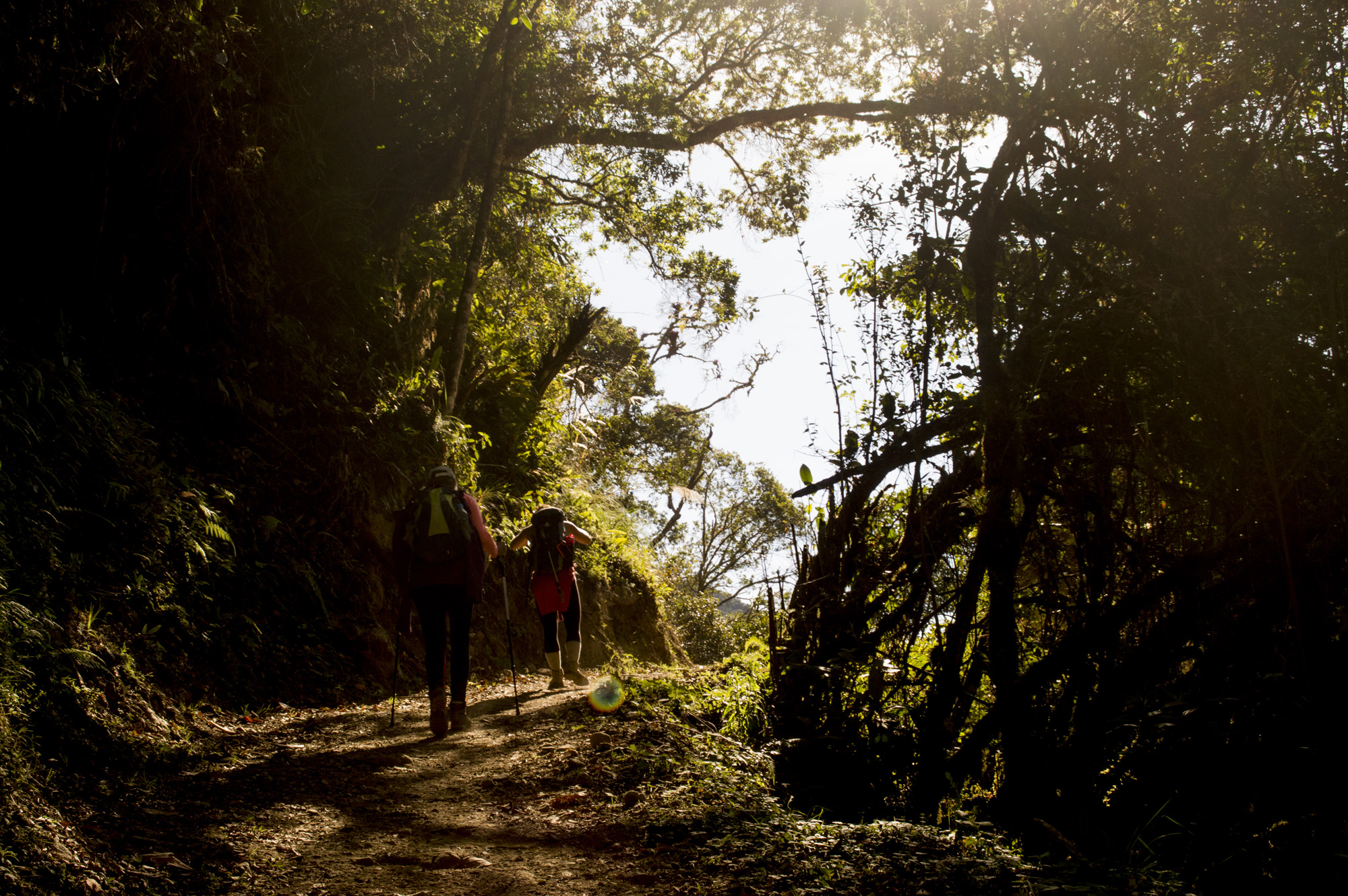 Inca 3 group forest hike.jpg