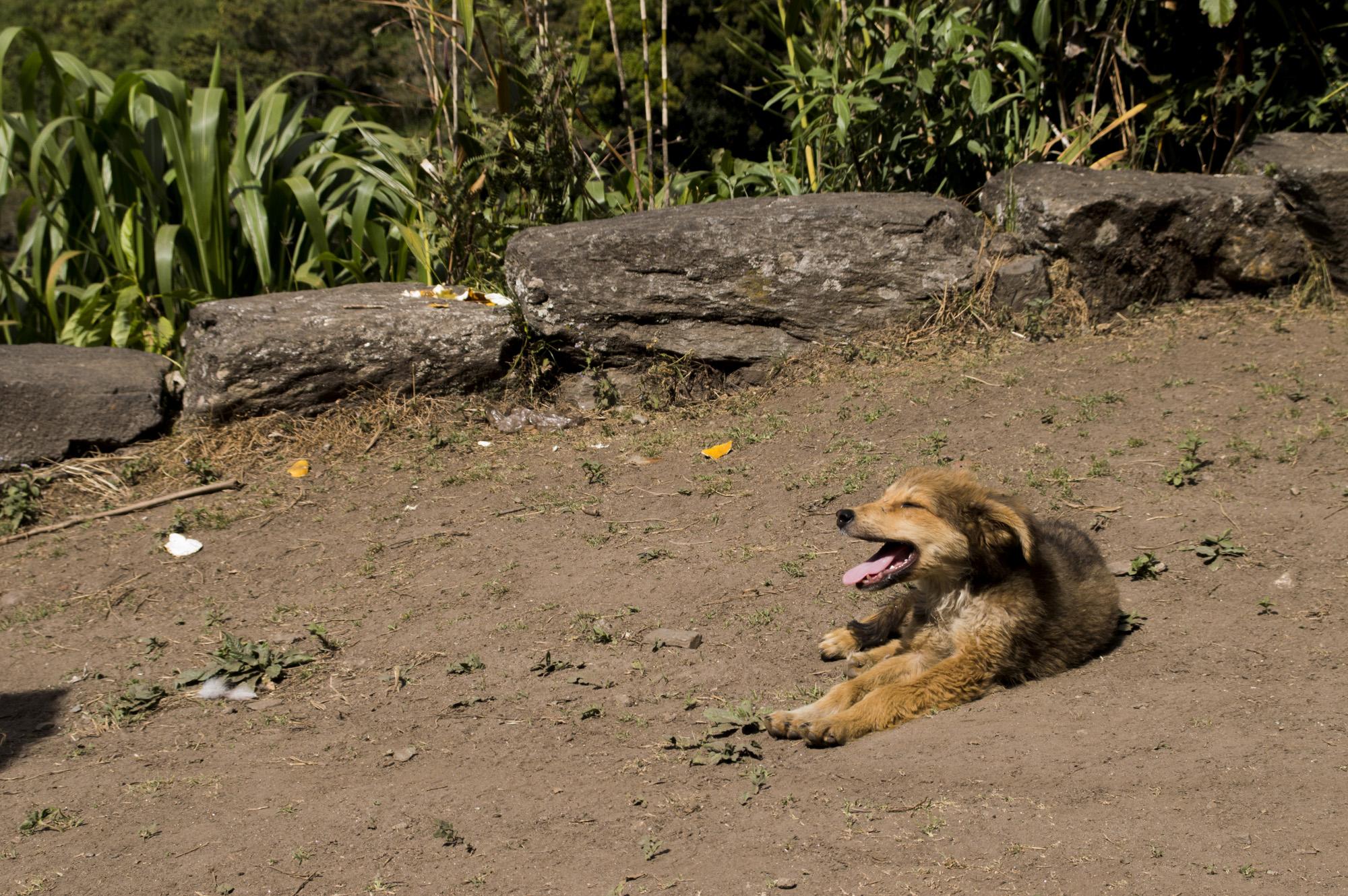 Inca 3 puppy happy.jpg