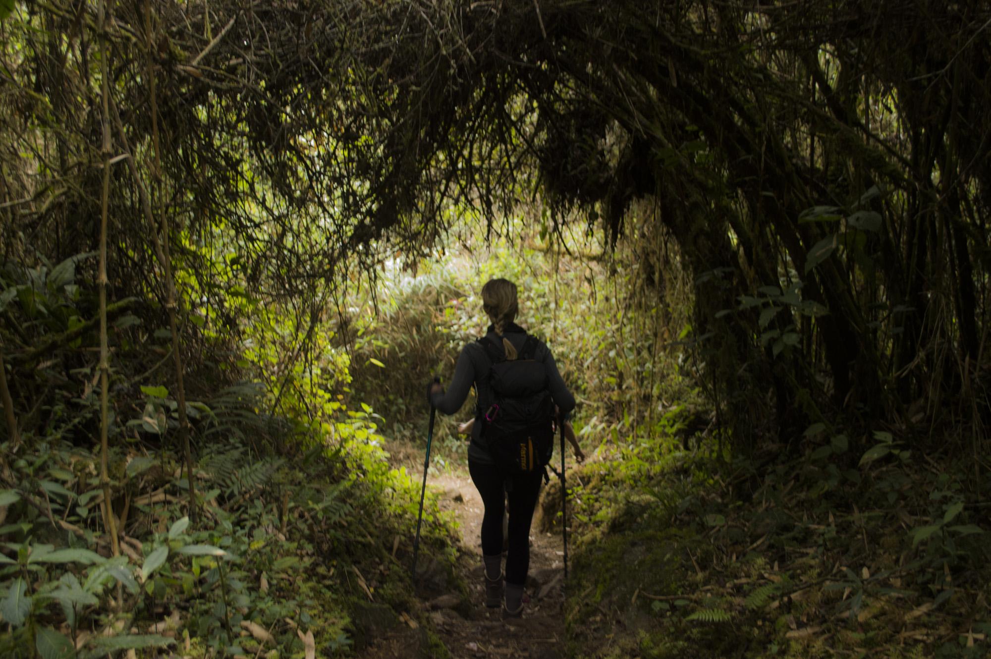 Inca 4 Jayne hiking in the cloud forest.jpg