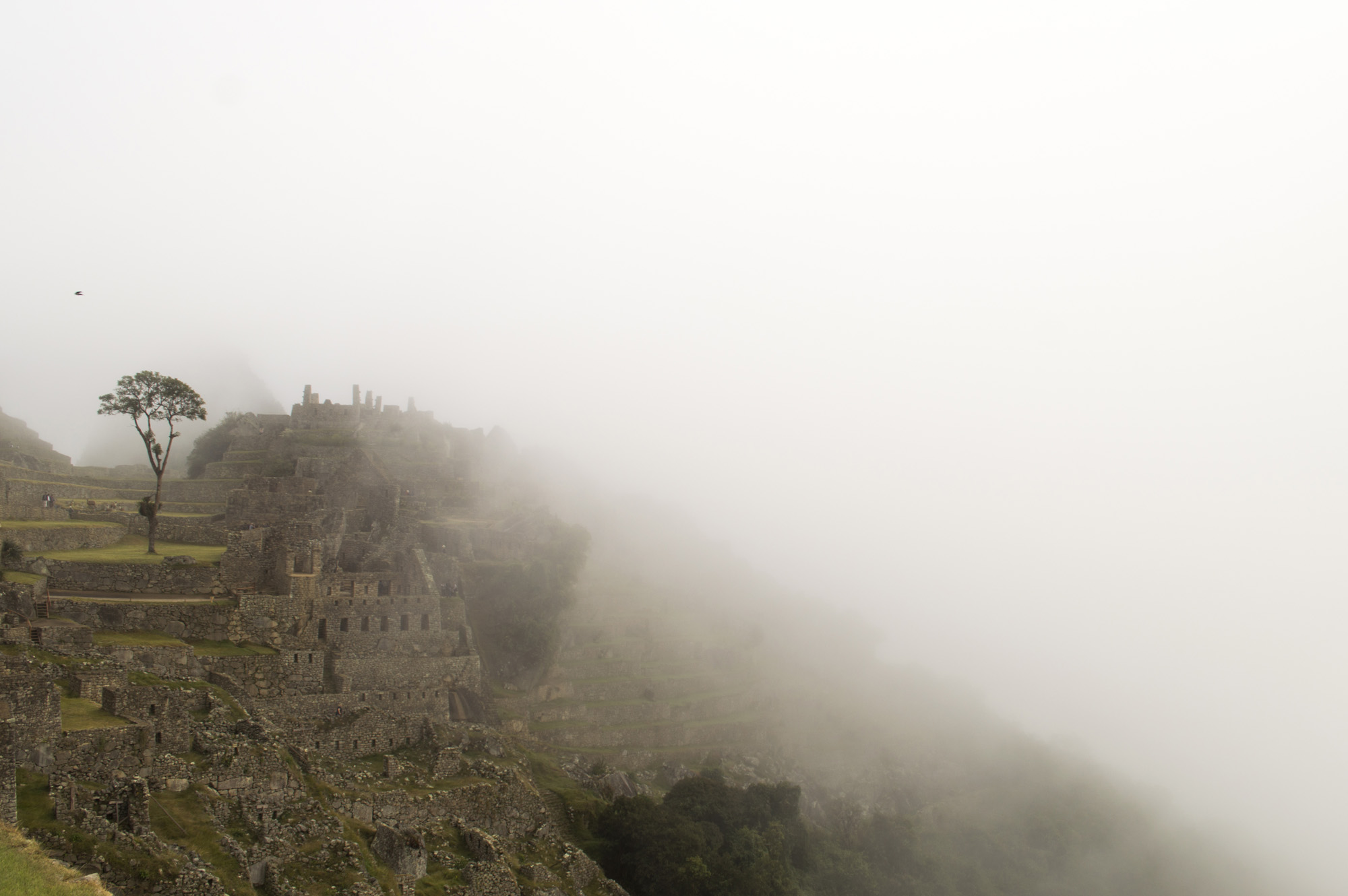 Inca 5 MP fog.jpg
