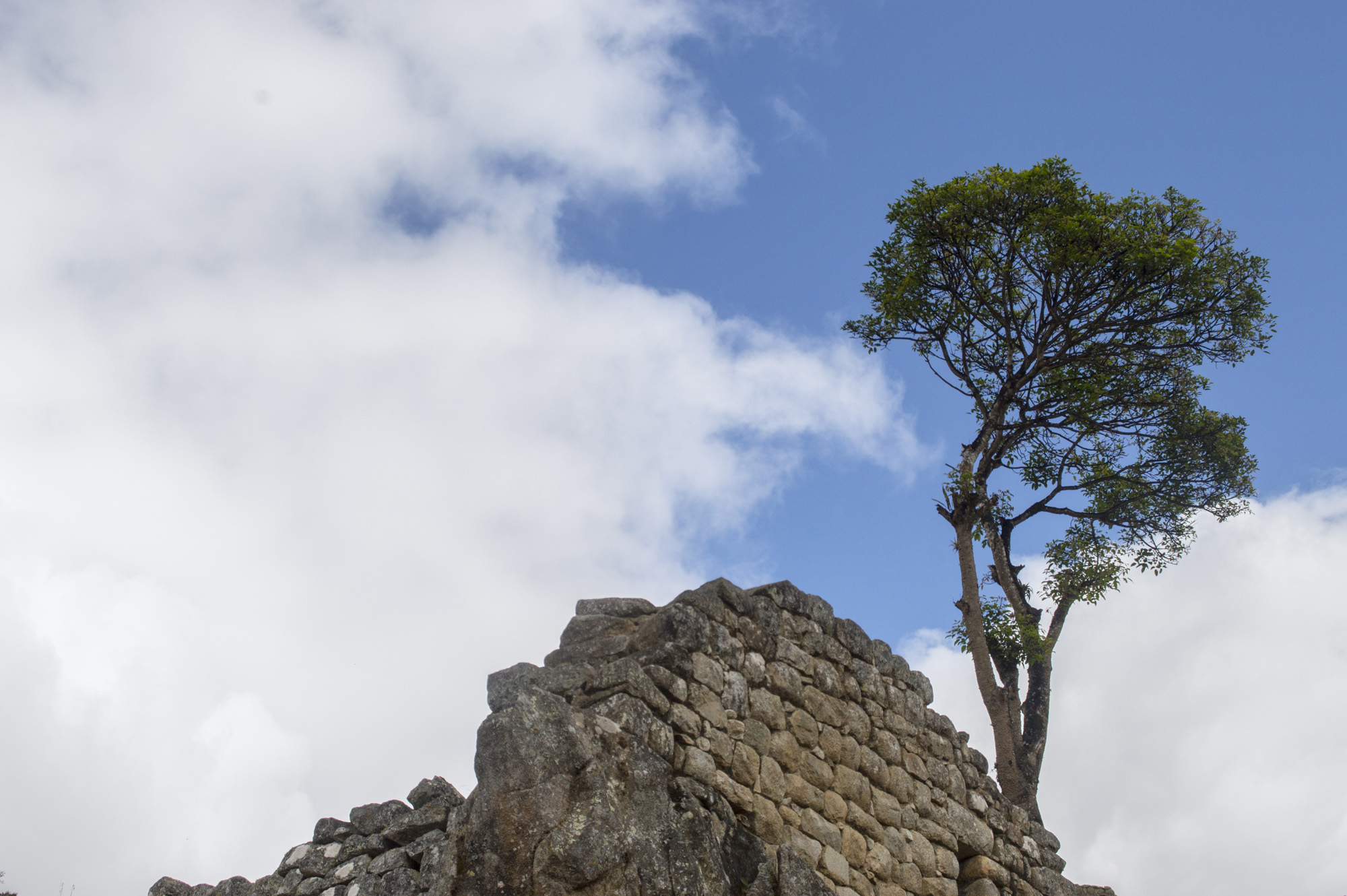 Inca 5 MP tree and wall.jpg