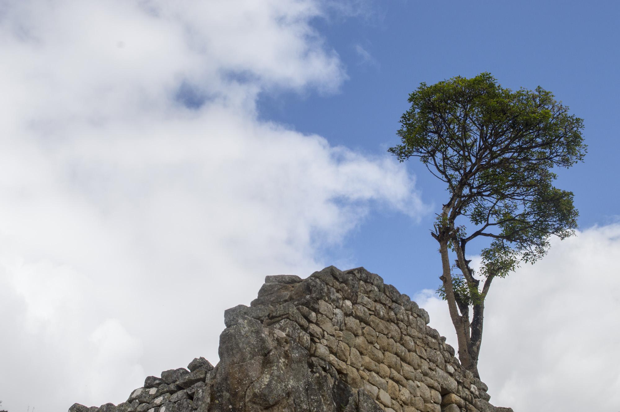 Inca 5 MP tree and wall.jpg