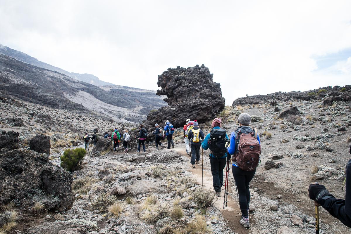 Kilimanjaro__0NB9940_Photo credit Nicola Bailey.jpg