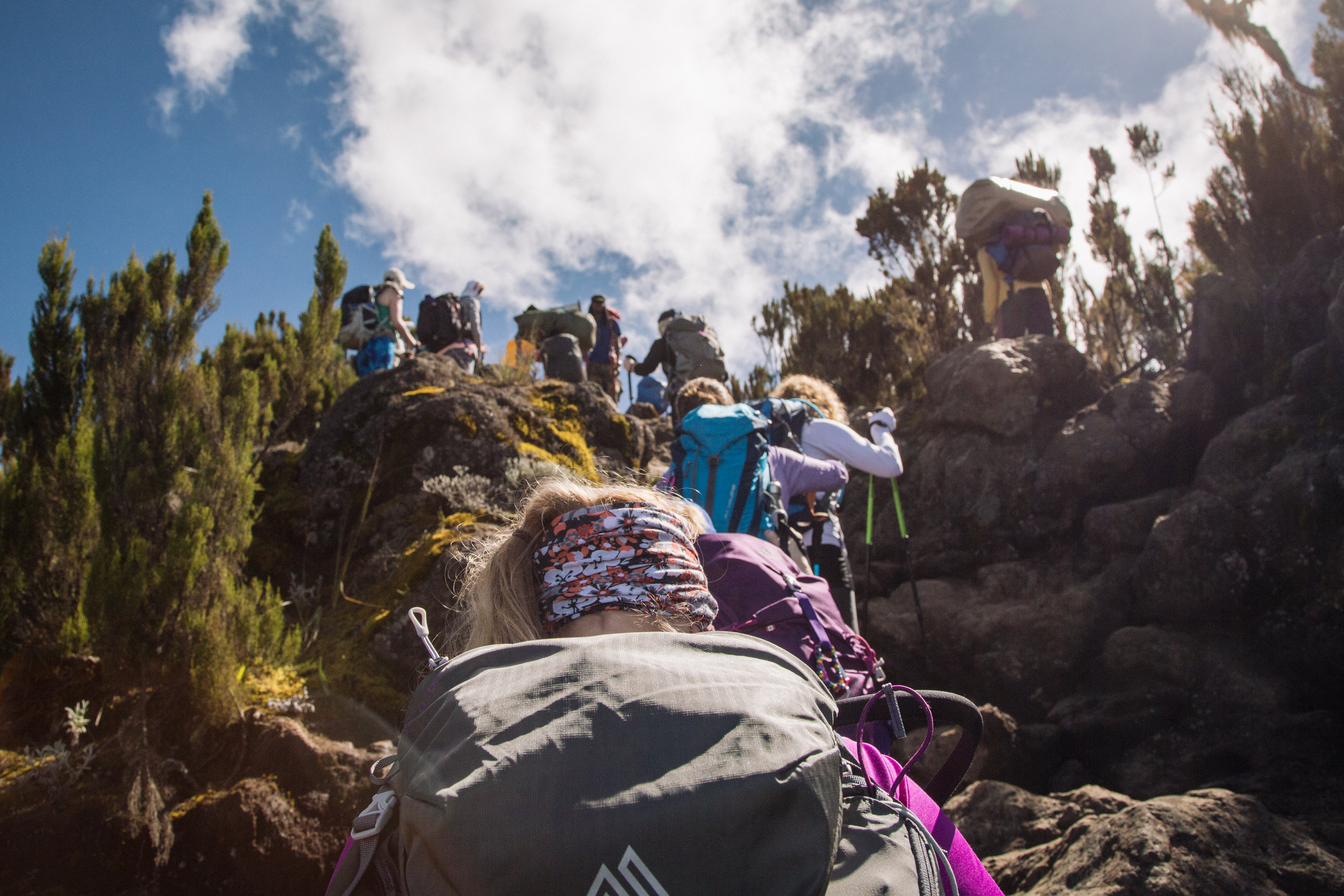 DAY 3:POLE, POLE - MACHAME CAMP to SHIRA CAMPElevation: 3,000 - 3,840 mHiking Time: 4 - 6 hoursDistance: 5 km