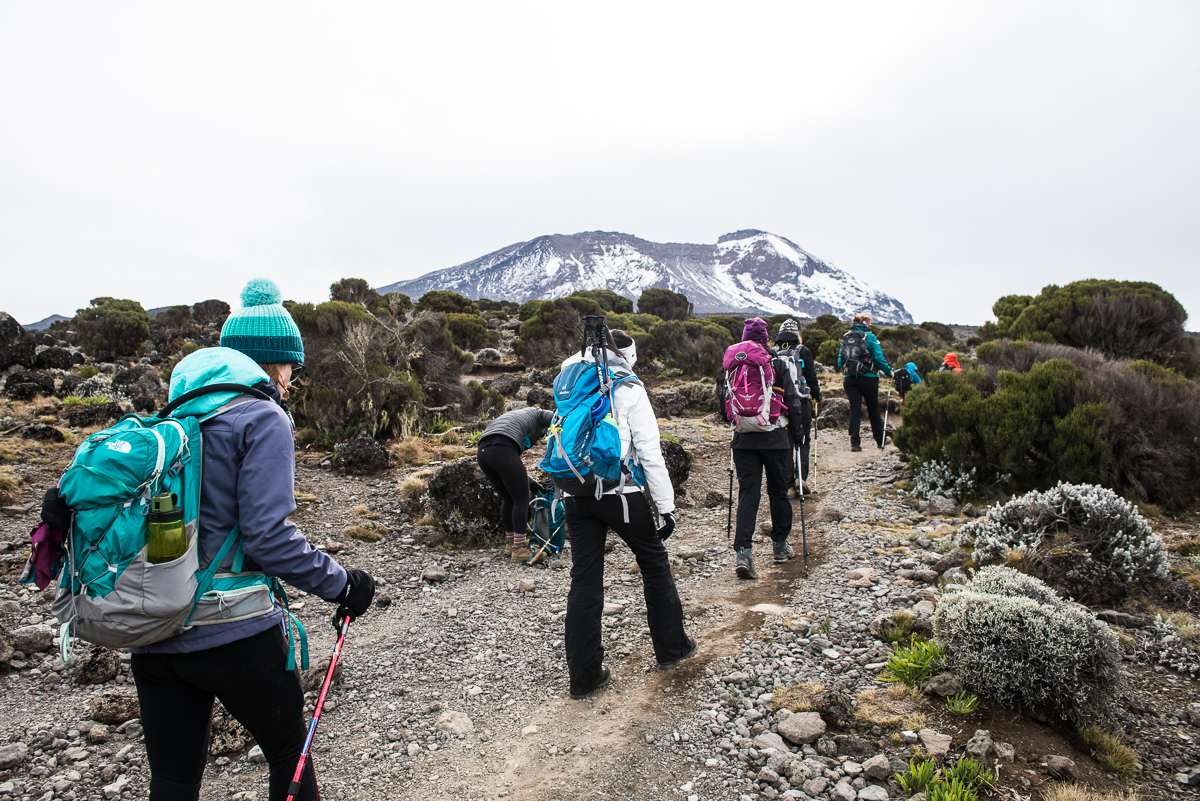 Kilimanjaro__0NB9568_Photo credit Nicola Bailey.jpg