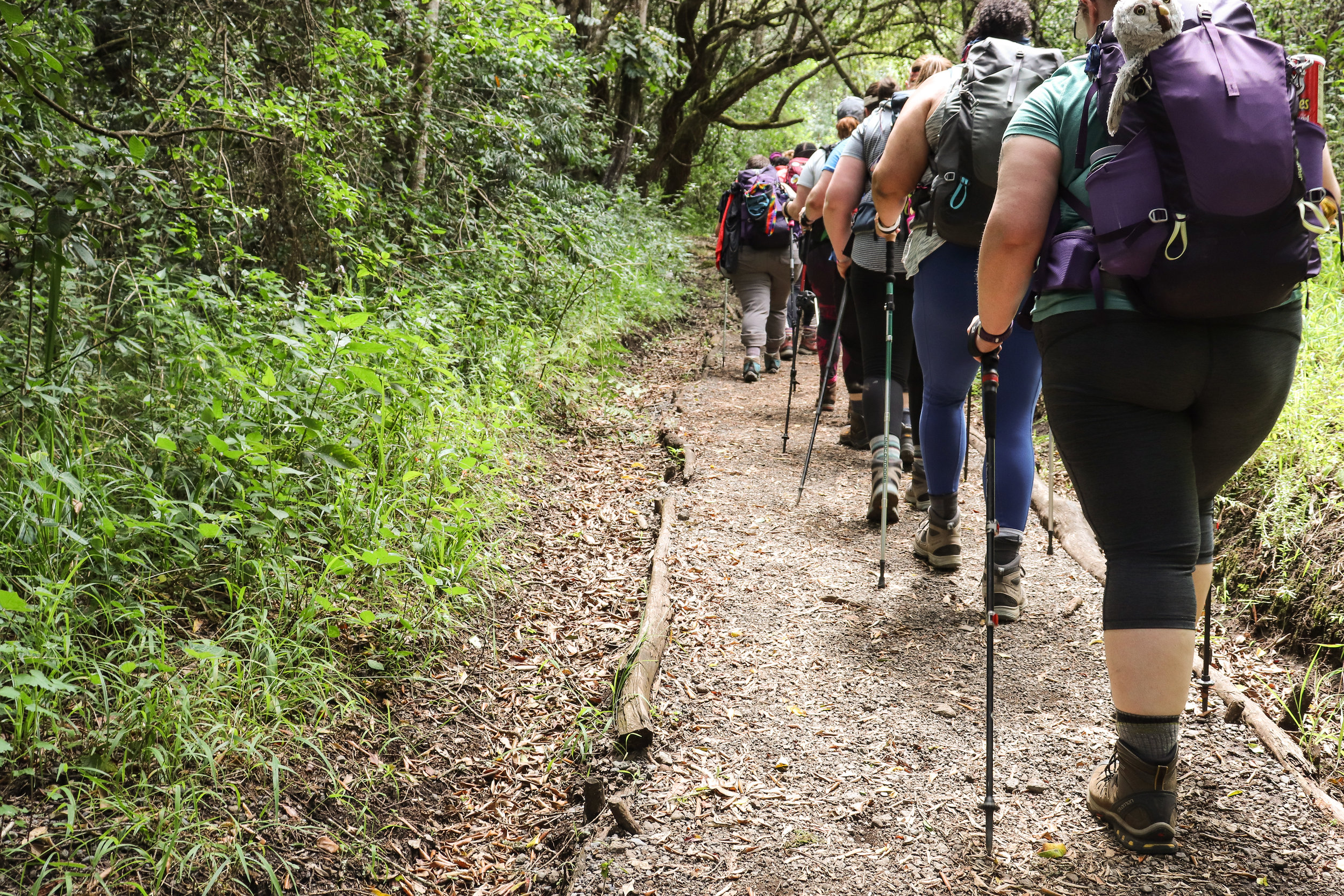 DAY 2:TWENDE! (aka LET'S GO!) - RONGAI GATE to SIMBA CAMPElevation: 2,364 - 2,671 mHiking Time: 4 - 5 hoursDistance: 7 km