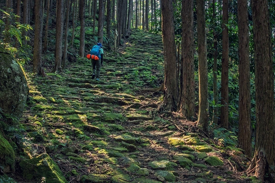DAY 4:OFF THE BEATEN PATH - NARA to KII PENINSULA to TAKAHARAHiking Distance: 5 kmElevation Gain: 250 m
