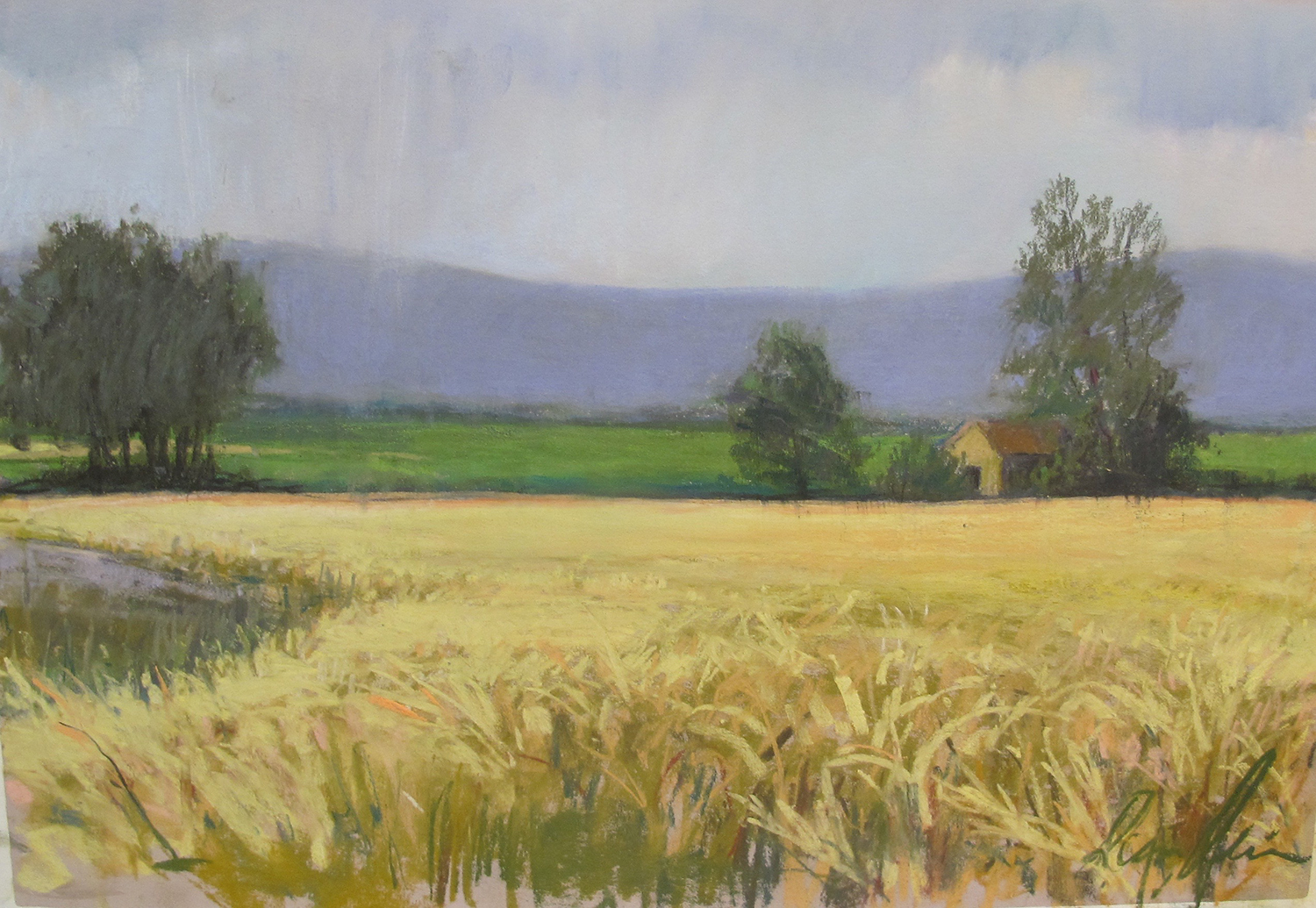 Rain on the Wheat, Moux, France