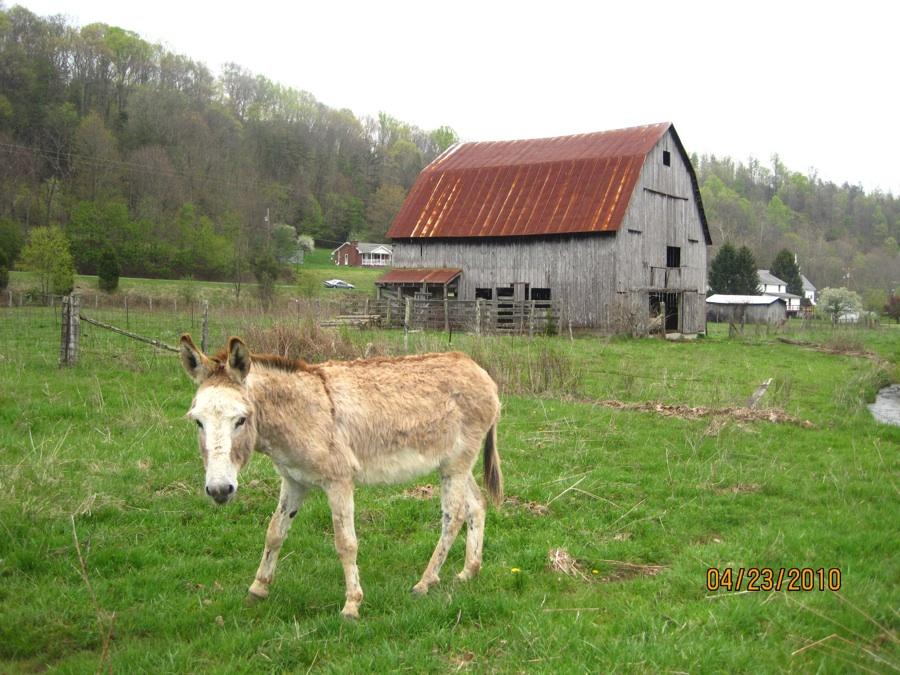 Horse_Barn.jpg