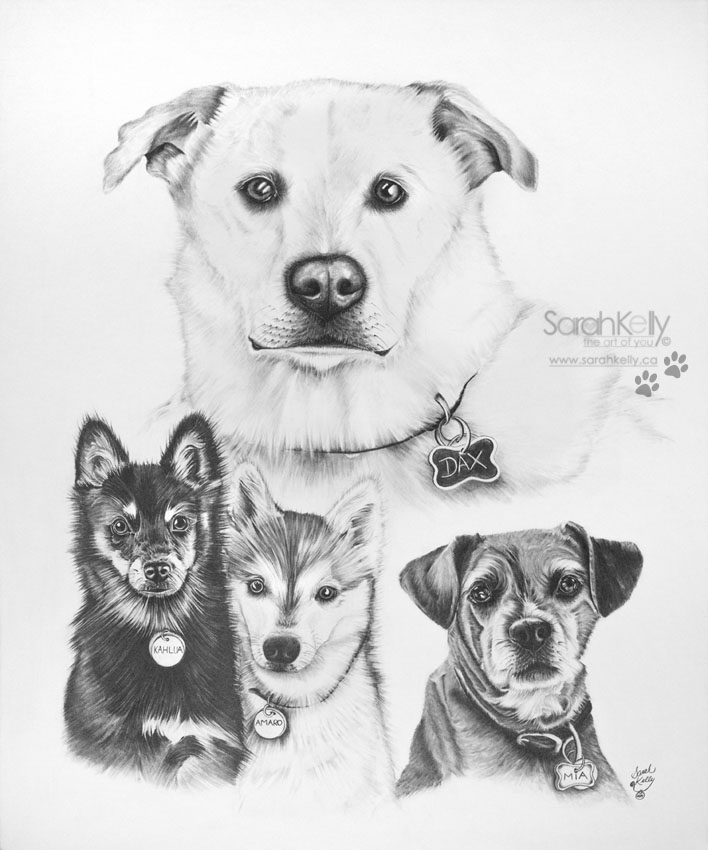 sarahkelly_pencil_portrait_drawings_petportraits_057.jpg