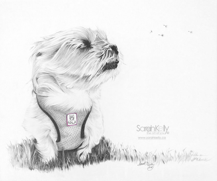 sarahkelly_pencil_portrait_drawings_petportraits_054.jpg