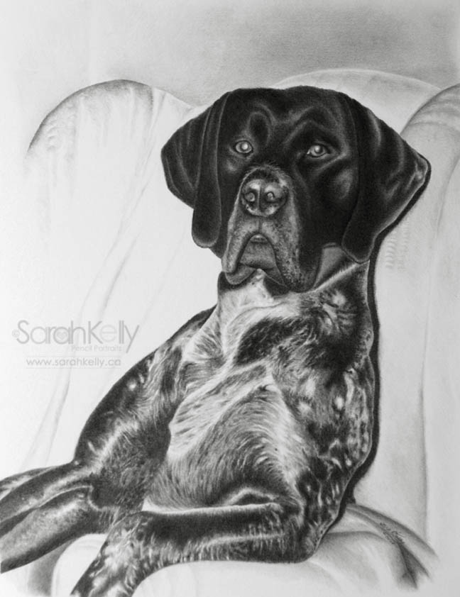 pencil_drawings_pets_02.jpg