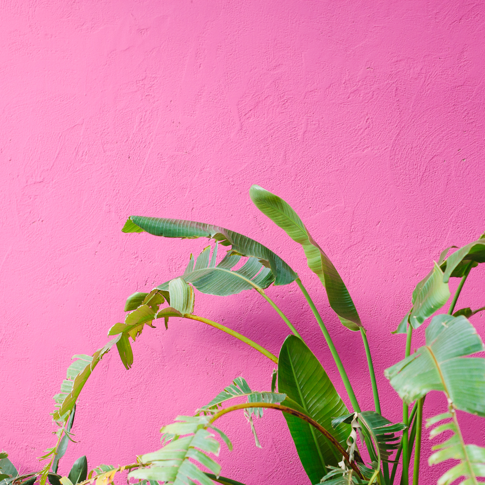 pink and bird of paradise.jpg
