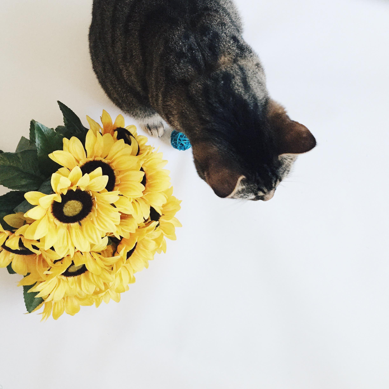 jax cat