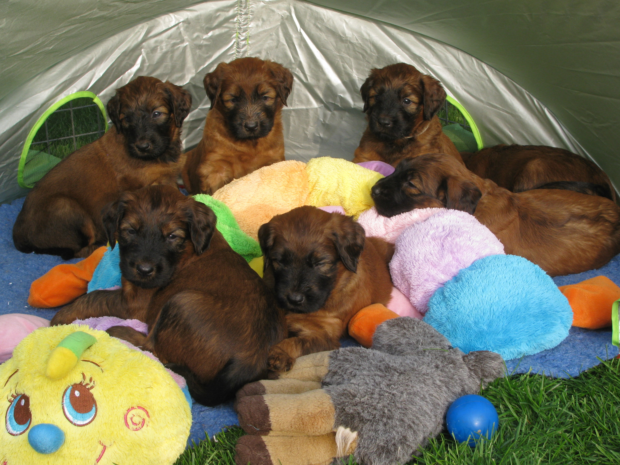Ella pups 1st day out 019.jpg