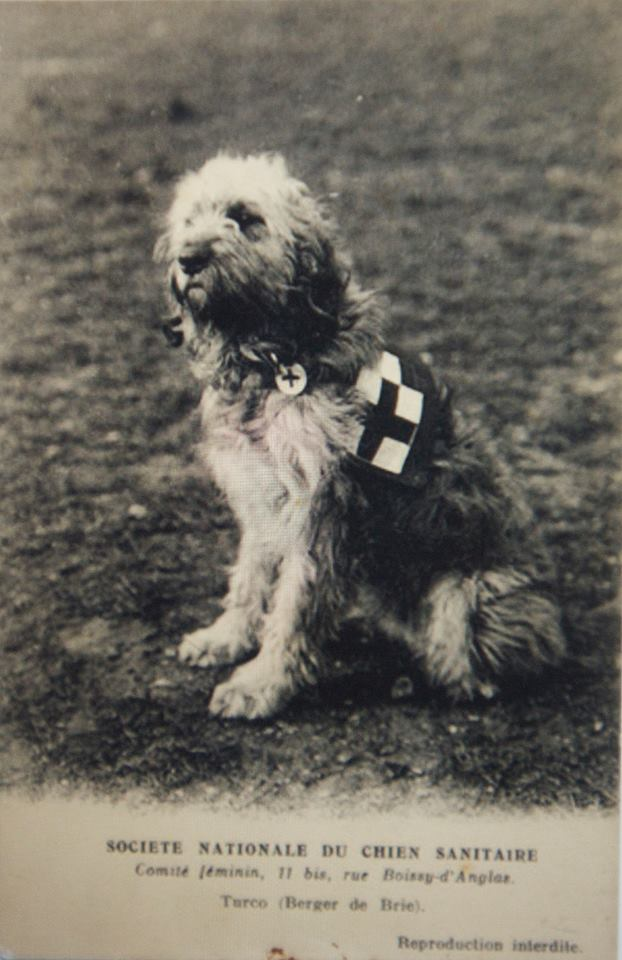 Search&rescue dog from 1915.jpg
