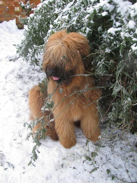 Ella snow web.JPG