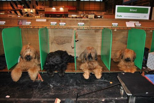 The Beaugency Team Crufts 2013
