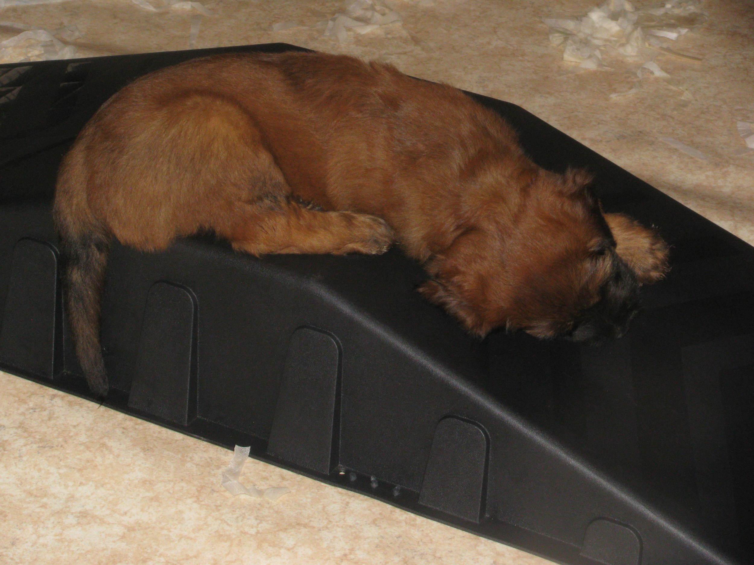 Ella x Dougal Pups 043.JPG