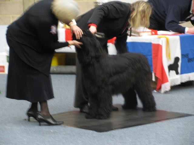 Puppy+Dog+-+Mitch BBC CH 2008.jpg