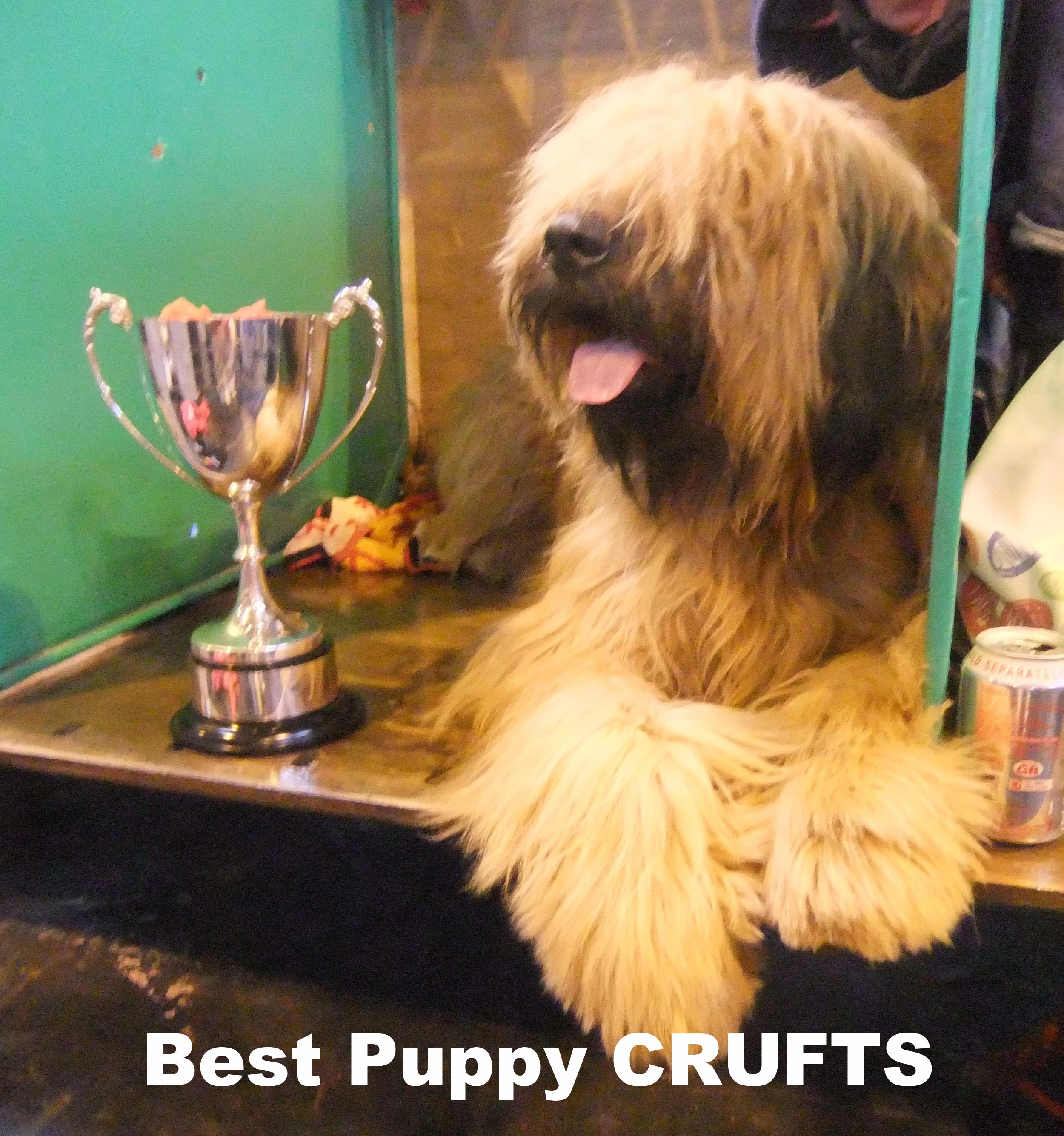 Best Puppy Crufts.JPG
