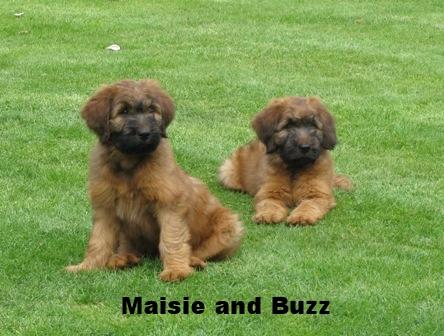 Buz&Maisie 10 weeks 003web.jpg