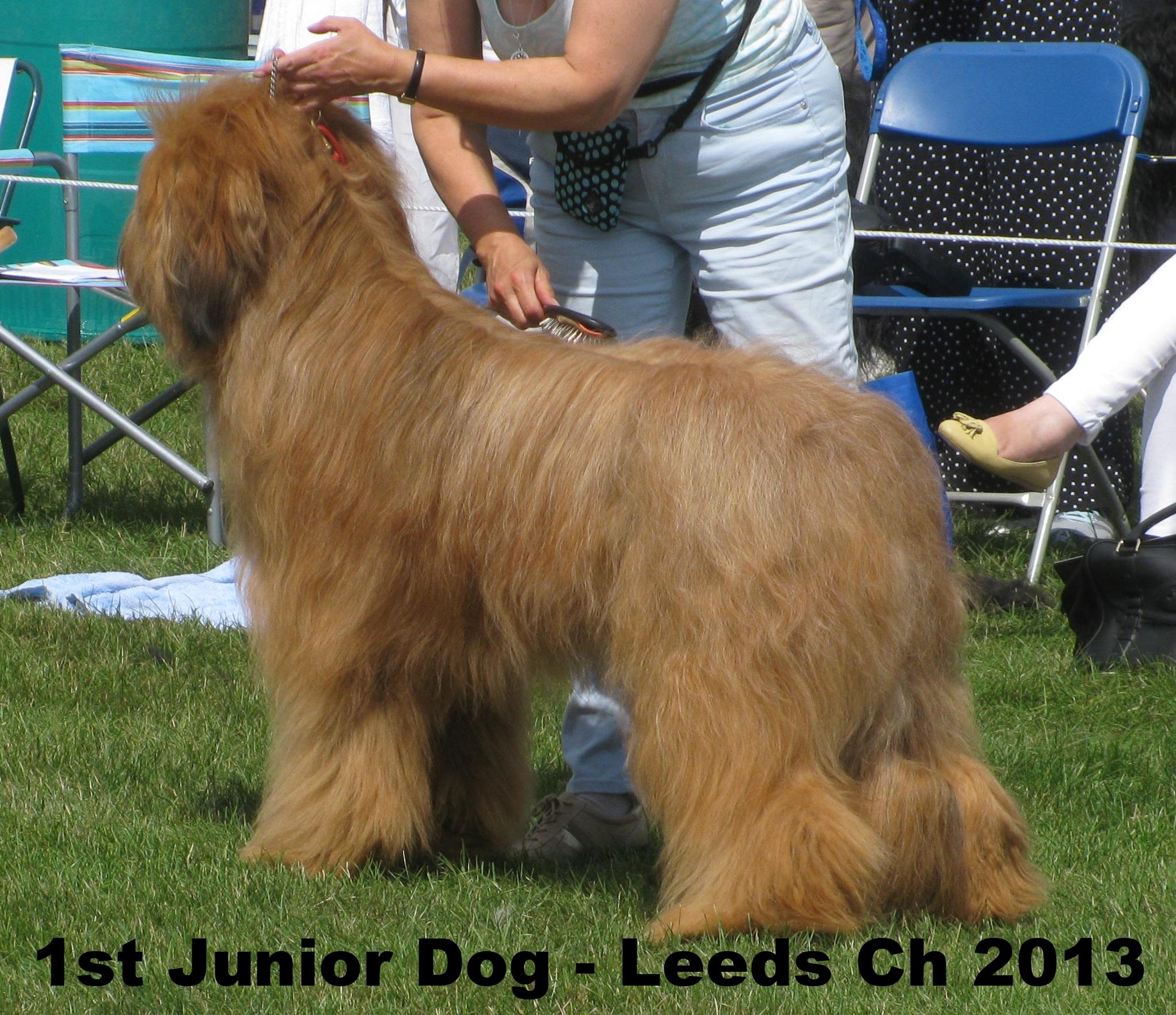 1st Junior Dog - Leeds July 2013.JPG