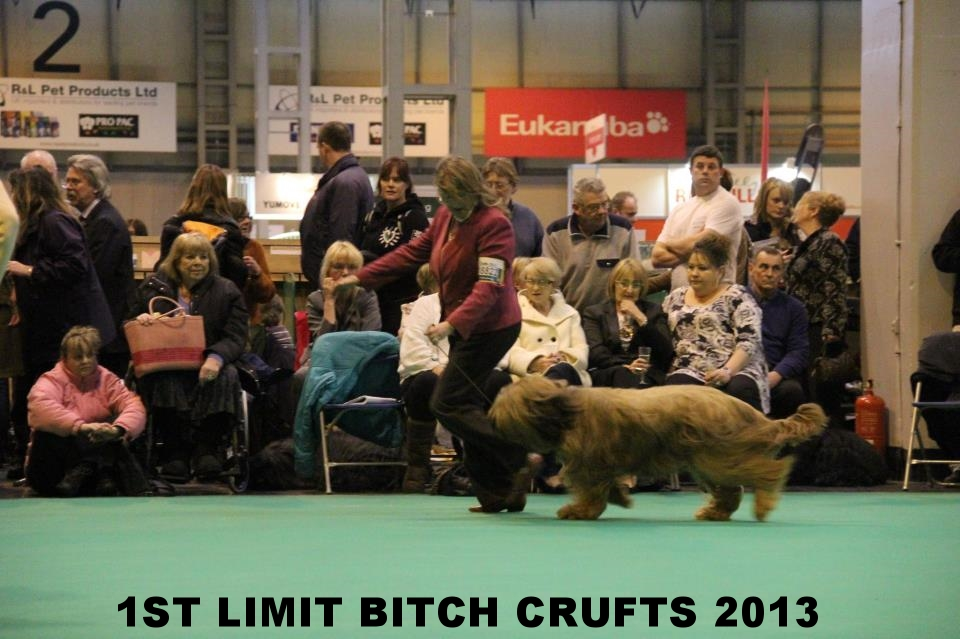 Ella on the move Crufts 2013.jpg