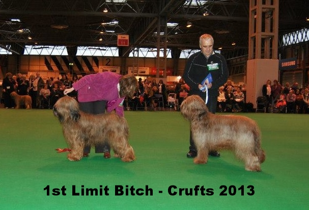 Ella 1st Limit Crufts 2013.jpg
