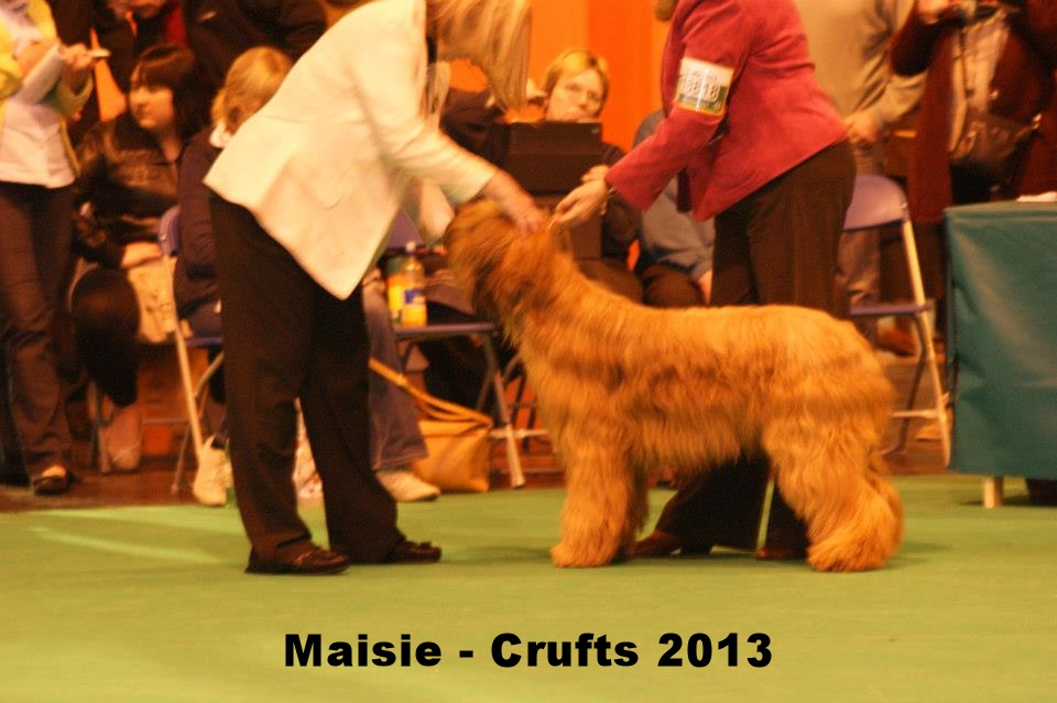Maisie Crufts 2013.jpg