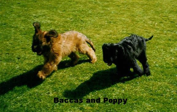 Baccas_Poppy.jpg