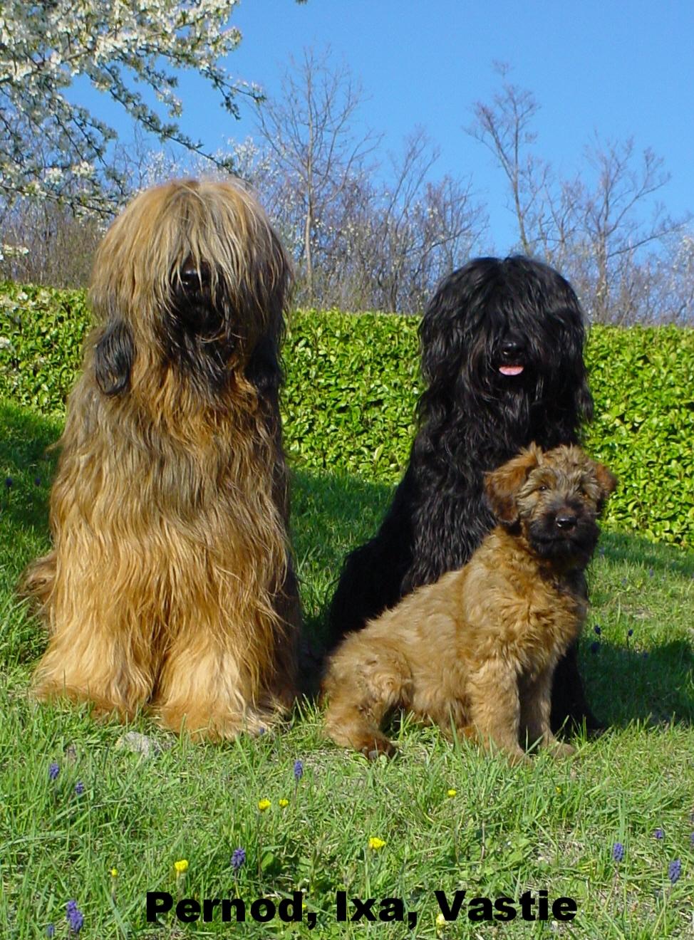 Pernod, Ixa and Vastie enjoying the French sunshine
